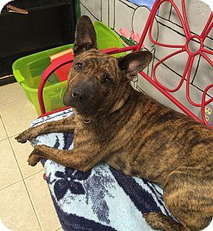 Terrier (Unknown Type, Medium) Mix Dog for adoption in Elyria, Ohio - Lula
