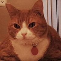 Adopt A Pet :: Tinkerbell - Winder, GA