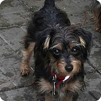 Adopt A Pet :: Katie - Conroe, TX