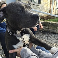 Adopt A Pet :: Mister - Vernon Hills, IL