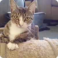 Adopt A Pet :: Amelia - Redondo Beach, CA