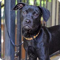 Adopt A Pet :: Addie - Baton Rouge, LA