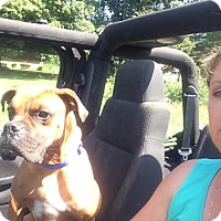 Adopt A Pet :: Atticus - Russellville, KY