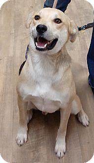 Shepherd (Unknown Type) Mix Dog for adoption in Divide, Colorado - Jasper