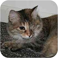 Domestic Mediumhair Cat for adoption in Marietta, Georgia - Michelle