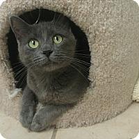 Adopt A Pet :: Bridgette - Winchester, CA