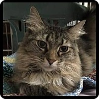 Adopt A Pet :: Cathy - Colorado Springs, CO