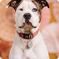 Adopt A Pet :: Luigi - Portland, OR
