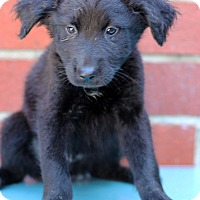 Adopt A Pet :: Alton - Waldorf, MD