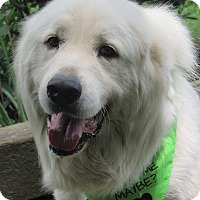 Adopt A Pet :: Russel - Kiowa, OK