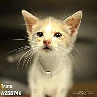 Adopt A Pet :: NUGGET - Conroe, TX