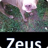 Adopt A Pet :: Zeus - Flint, MI