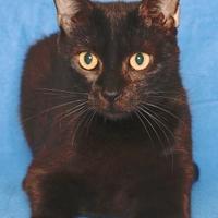 Adopt A Pet :: TONGA - Gloucester, VA
