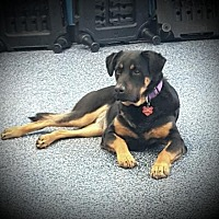 Adopt A Pet :: Hannah - LITTLETON, CO