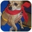 Photo 4 - Chihuahua Dog for adoption in Overland Park, Kansas - Pedro