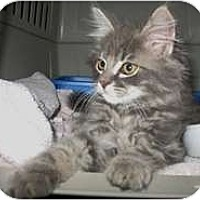 Adopt A Pet :: Hobo - Shelton, WA