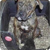 Adopt A Pet :: Zoey - Claypool, IN