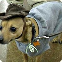 Adopt A Pet :: Eddie - Grand Rapids, MI