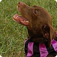 Adopt A Pet :: TRISTYN - Bryan, TX
