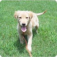 Adopt A Pet :: Sadie - Adamsville, TN