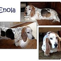 Adopt A Pet :: Enola - Marietta, GA