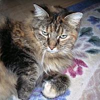Adopt A Pet :: Christie - Midvale, UT