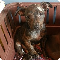 Adopt A Pet :: Arnold*ADOPTED* - Chicago, IL