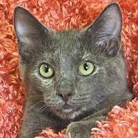 Adopt A Pet :: Louise - Renfrew, PA
