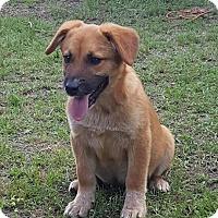 Adopt A Pet :: Sally - Dublin, GA