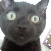 Adopt A Pet :: Lucas - Jackson, NJ