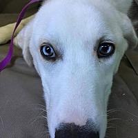 Adopt A Pet :: Cisco - Whitewright, TX