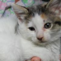 Adopt A Pet :: Emily - Robinson, IL