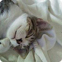 Adopt A Pet :: Crowned Prince - Tampa, FL
