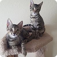 Adopt A Pet :: Ivy & Lily - Brandon, FL