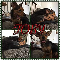 Adopt A Pet :: Toby - Henderson, NV