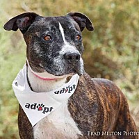 Adopt A Pet :: TIMON - Albuquerque, NM