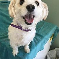 Adopt A Pet :: Bubbles - Costa Mesa, CA