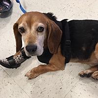 Adopt A Pet :: Walter Hughes - Waldorf, MD