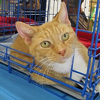 Adopt A Pet :: Dreama - Richmond, VA