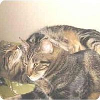 Adopt A Pet :: Lady Harry - Mesa, AZ