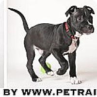 Adopt A Pet :: Bailey - Chicago, IL
