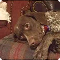 Adopt A Pet :: Kimberley - Columbus, OH