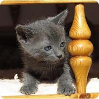 Adopt A Pet :: Skyy - La Jolla, CA