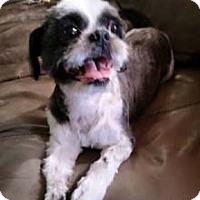Adopt A Pet :: PIPER - Mission Viejo, CA
