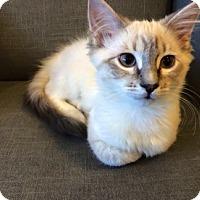 Adopt A Pet :: Dax - St. Louis, MO