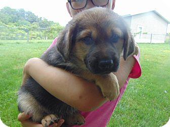 German Shepherd Dog Mix Puppy for adoption in Greeneville, Tennessee - Natasha