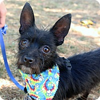 Adopt A Pet :: Howie - Winters, CA