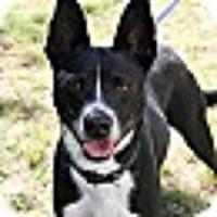 Adopt A Pet :: TonyBLU - Alexandria, VA