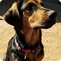 Adopt A Pet :: Maggie - Snyder, TX