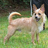 Adopt A Pet :: Marley - Siler City, NC